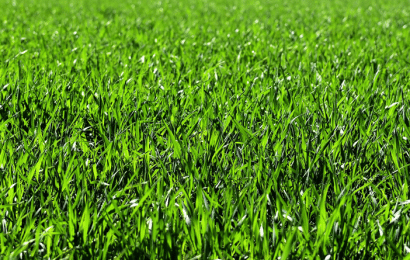 Césped para el Jardín: Cómo Elegir el Suelo.