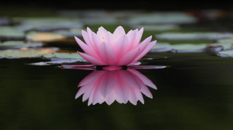 Cómo Crear un Estanque de Jardín Zen en Cuatro Sencillos Pasos