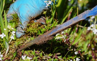 Cómo Limpiar el Jardín de las Malas Hierbas.