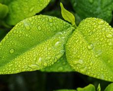 Entender Cómo Está una Planta Mirando las Hojas
