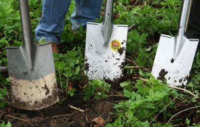 Fertilizante Casero para Rosas, Geranios, Tomates y Plantas