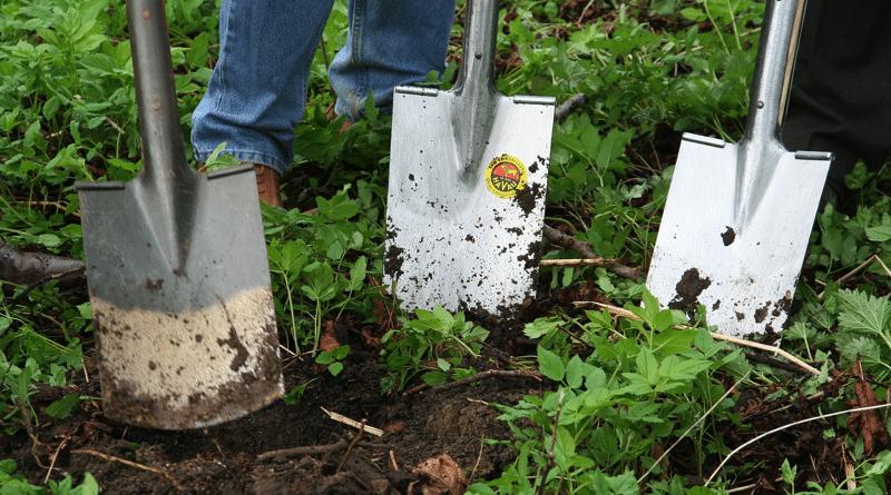 Fertilizante Casero para Rosas