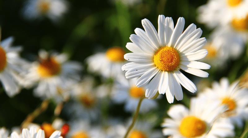 Flores para el Cumpleaños de un Amigo Especial