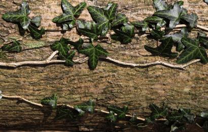 Planta que Nunca Muda Sus Hojas: 5 Árboles de Hoja Perenne para el Jardín