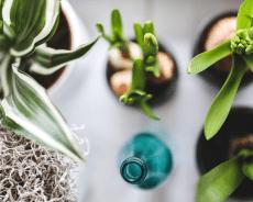 Plantas de Interior con Poca Luz