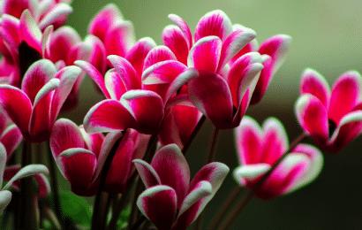 Plantas de Maceta Resistentes al Frío