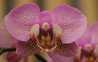 Plantas para Regalar: Cómo y Cuáles Elegir