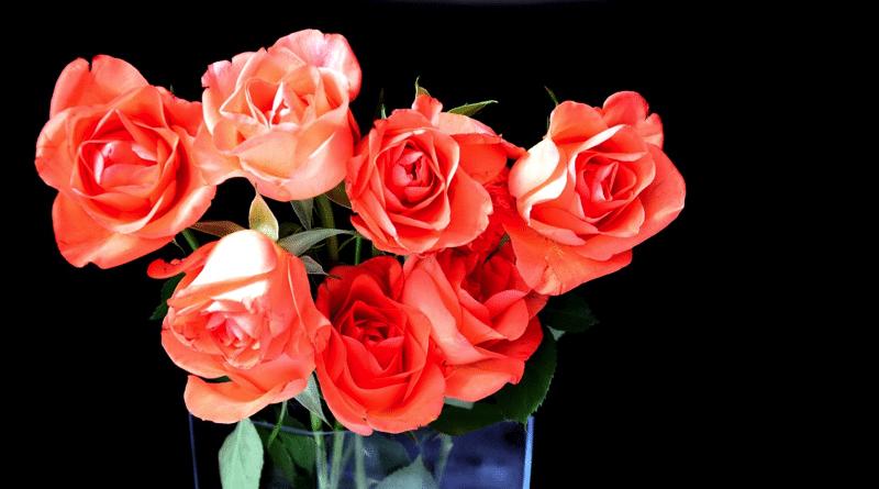 Rosa Cut: Como Hacer que la Flor Dure y Se Conserve