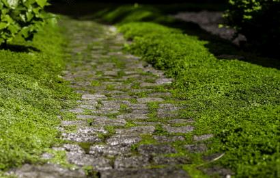 Senderos de Jardín: Senderos y Pasarelas de Bricolaje